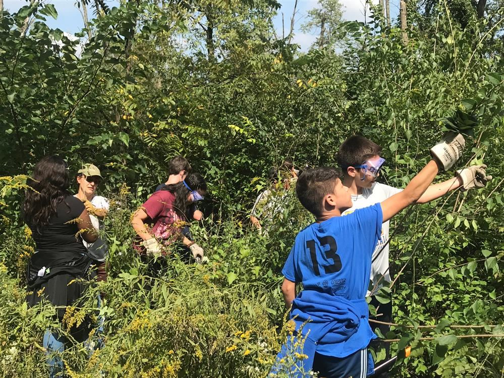 Removing Invasive Species at Camp Sagawau.
